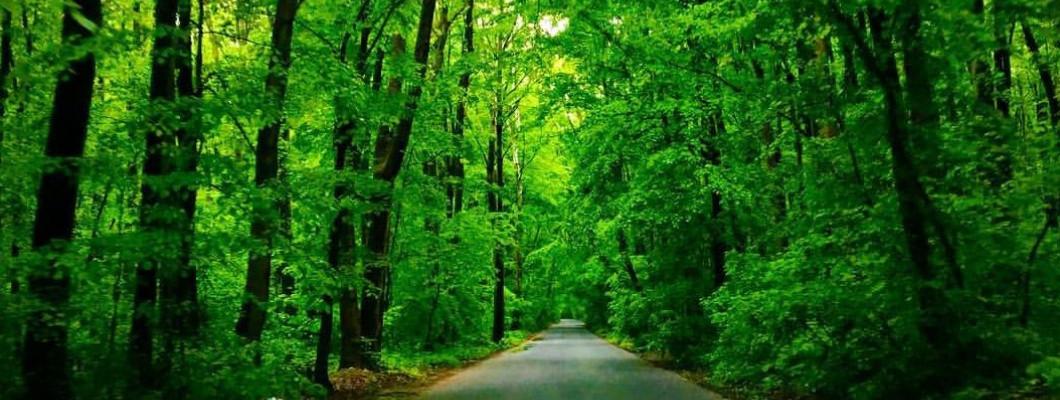 Strada Vadul Moldovei și statutul de drum forestier