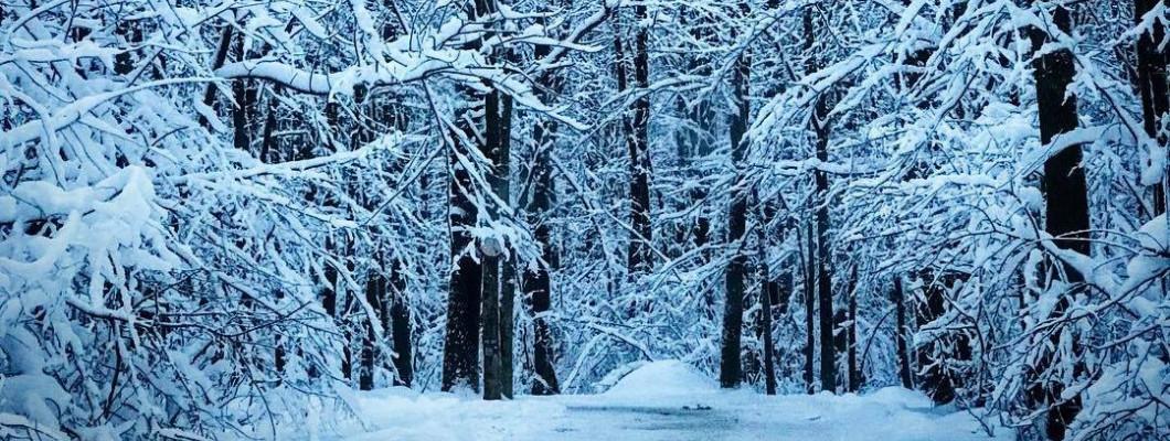 3 activități de iarnă în pădurea Băneasa