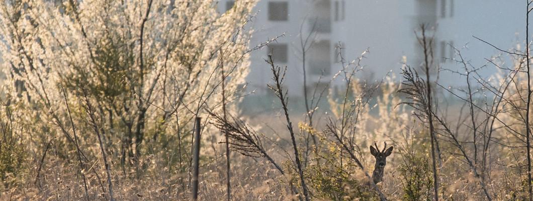 Măsuri de precauție pentru drumețiile în Pădurea Băneasa – cum te protejezi de căpușe și țânțari și alte vietăți