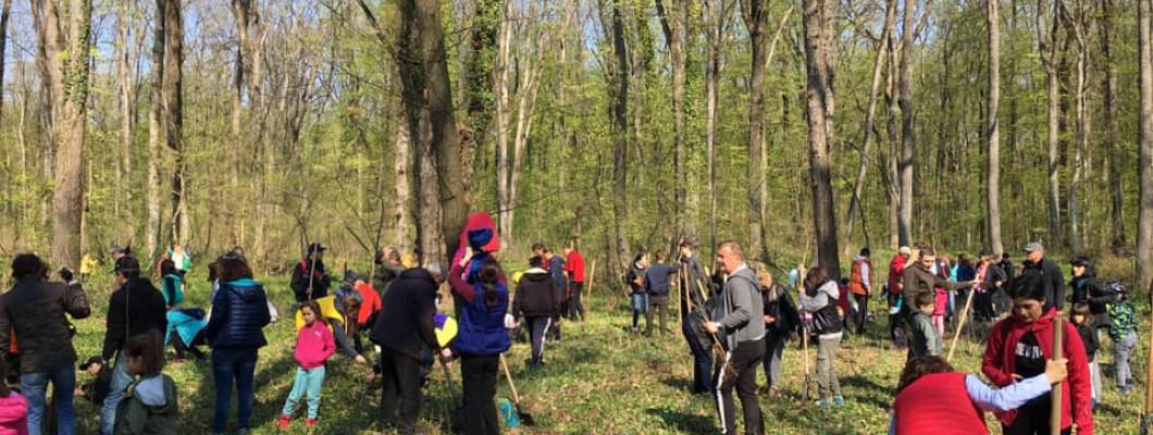 Misiune îndeplinită: am plantat încă 1000 de stejari în Pădurea Băneasa